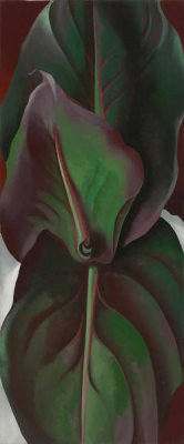 Georgia O'Keeffe - Canna Leaves, 1925
